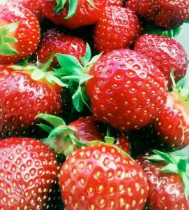 Erdbeeren der Sorte Polka vom Gemüsehof Biewener