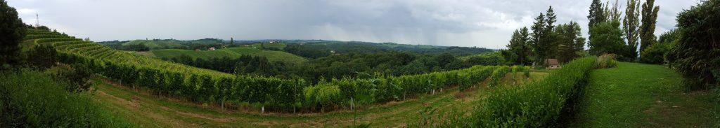 Weinanbaugebiet Jeruzalem